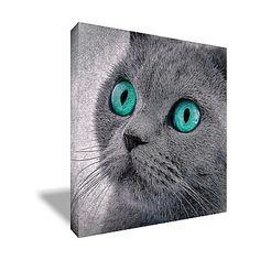 Tableau carré sur toile chat collection chat aux yeux turquoises