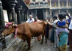 Devotees of Siva at Nataraja temple in India - WIN-Initiative/The Image Bank/Getty Images