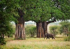 Tarangire National Park, Tanzania | Flickr - Photo Sharing!