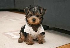 Small house dogs that don't shed | Yaoqunsz Images Gallery