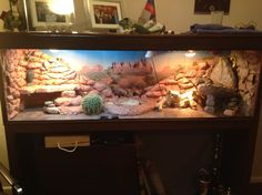 Bearded Dragon Habitat My Bearded Dragon S Habitat By