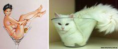 Hilarious & Funny Photos of Cats Posing Like 1950s Pin-Up Girls.|FunPalStudio|Illustrations,  Entertainment, beautiful, creativity, animals, cat, Photography, photographers, funny, humor.