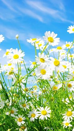 Spring Flowers Wallpaper iPhone - Best iPhone Wallpaper
