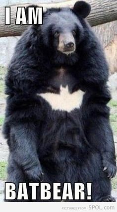 I AM BATBEAR