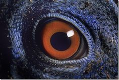 Nature in the Animals Eyes Unbelievable Pictures of Animals eyes