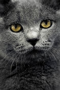 the cat   Flickr - Photo Sharing!