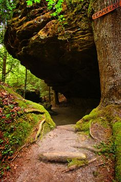 Dismals Canyon, Bankhead National Forest, Alabama, USA