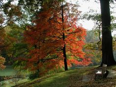 Fall Color in the Garden - Winterthur Museum, Garden and Library