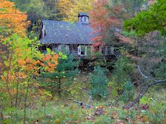 Elkmont, my favorite abandoned town and a fun place to hike as long as you bring bear repellent!