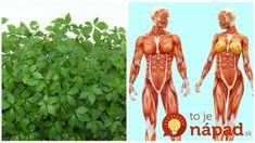 Volajú ju bylina nesmrteľnosti či elixír života: Najliečivejšia rastlina na svete, máte ju doma aj vy? Health And Beauty