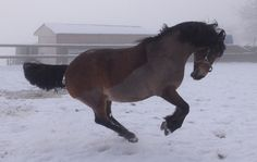 White Stuff, Horse Pictures, Horse Love, Horse Riding, Welsh, Baby Animals, Snow, Horses, Girls