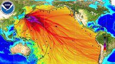 Fukushima Fish Still Contaminated