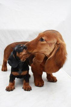 le plus mignon chien du monde, race de chien taille moyen