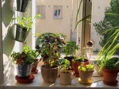 Aprenda a fazer sua horta em um curso online e gratuito