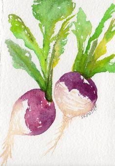 Colorful Turnips watercolor painting original by SharonFosterArt, art Watercolor Fruit, Watercolor And Ink, Watercolour Painting, Watercolor Flowers, Painting & Drawing, Watercolors, Watercolor Projects, Watercolor Techniques, Veggie Art