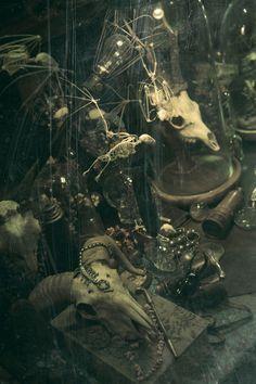 "kazuvanz's corner (by kazuvanz) ""skull and skeleton - melting in the light"" #photography #curiosities"