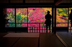 momiji 12 - autumn leaves #24 (Rurikou-in temple, Kyoto)