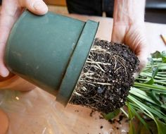 Avoid These 9 Mistakes & Your Indoor Plants Won't Die Again You love growing plants indoors but they die soon (or you kill them)? This won't happen again if you avoid these 9 mistakes! Spice Garden, Veg Garden, Garden Plants, Indoor Plants, Garden Web, Garden Table, Balcony Garden, Garden Hose, Growing Plants Indoors