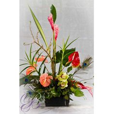 """Tropical Infusion"" - Sexy & bold, this tropical selection is an attention getter! Perfect for Anniversary to a Grand Opening...Anthurium, orchids & ginger are skillfully arranged among tropical greenery and peacock feathers in a wonderful ceramic tray."