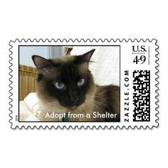 >>>The best place          Adopt from a Shelter 016 Postage Stamps           Adopt from a Shelter 016 Postage Stamps We have the best promotion for you and if you are interested in the related item or need more information reviews from the x customer who are own of them before please follow th...Cleck Hot Deals >>> http://www.zazzle.com/adopt_from_a_shelter_016_postage_stamps-172527348372092067?rf=238627982471231924&zbar=1&tc=terrest