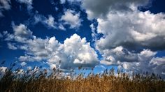 Reeds by Dávid Detkó on 500px | with Nokia Lumia 830 #nokia #lumia830 #500px