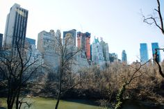 NYC Central Park (photo by Sharisse Coulter)