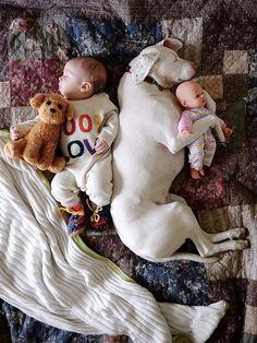 Nora, uma pointer, tem como melhor amigo o nenê Archie de 8 meses, além de mais três gatinhos e e dois cães resgatados.As fotos dessa turminha são extrem