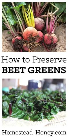 Preserve Beet Greens Next time you harvest beets, don't compost the tops! Beet greens are delicious fresh or preserved. Here's how to preserve beet greens for freezing. You'll love adding them to soups, stews, and casseroles all winter long! How To Store Beets, How To Freeze Beets, Freezing Beets, Beet Green Recipes, Canning Beets, 13 Desserts, Plated Desserts, Fresh Beets, Basil Chicken