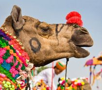 Delhi Agra Trip Leading Tour Operator in India Providing Special Discount Deal on Golden Triangle Tour With Ajmer And Pushkar Book your Delhi Agra Jaipur Tour With Ajmer And Pushkar with Us at Affordable Price.