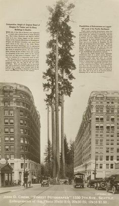 Great pic of what Seattle was, and could be again, comparing the old growth forest that was originally here to modern Seattle skyscrapers from 1907.