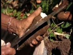 Tobago Cocoa Estate on UKTV Food Series | For Estate Tours go to http://tobagococoa.com/tours.php