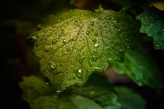 Photo Morning Dew by Olivier Ferrari on 500px