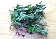 What Are Some Really Awesome Ways to Use Chocolate Mint? — Good Questions