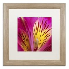 Latitude Run Princess Lily Abstract Framed Photographic Print Size: 1