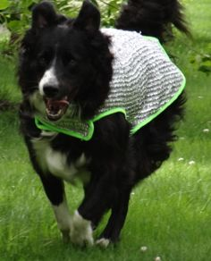 Keeping Dogs Cool with the Chillybuddy Dog Cooling Jacket