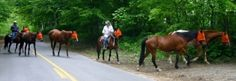 Adventure Horse Riding in NYS. Learn to Ride in 4 Days !!!
