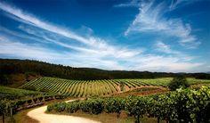 Ruta del Vino de las Rías Baixas