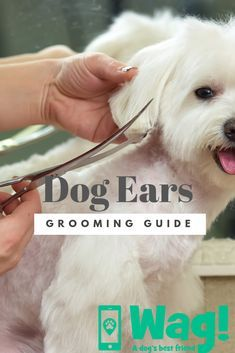 How To Groom A Dog S Ears In 2020