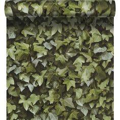 1000 id es sur le th me mur de lierre sur pinterest lierre plantes artific - Papier peint pour cacher imperfections mur ...