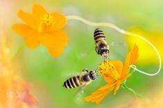 ~ Sweet Honey   You & Me ~ - Sweet Honey   You & Me  甜蜜蜜   你和我 名稱 Name:Bee/Honey bee  蜜蜂 圖像大小 Image Size : 6000 x 4000 pixel My Facebook page : https://www.facebook.com/fuyi.chen.9