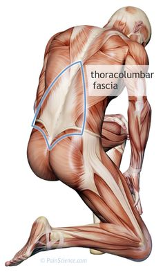 Does Fascia Matter? A detailed critical analysis of the clinical relevance of fascia science and fascia properties