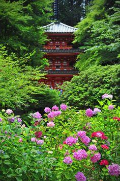 Three-story pagoda with hydrangea, Gansen-ji Temple, Kizugawa, Kyoto, Japan