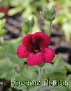 Voodoo m.l Planters, Voodoo, Pictures, Plant, Window Boxes, Pot Holders, Flower Planters, Pots