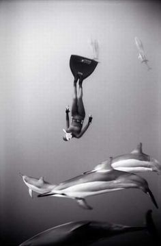 Freediving with dolphins.