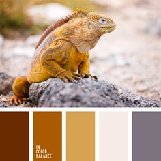 color caramelo, color de piedras, color iguana, color mostaza, color ocre, combinaciones de colores, elección del color, gris pálido, gris rosado, marrón, paleta de colores monocromática, tonos marrones.