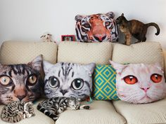 Adorable Realistic Printed Cat Cushions from Carrie Siamon - http://buff.ly/1inZdzX