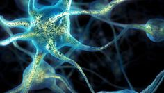 Вести.Ru: Биологи выяснили, как медитация меняет анатомию мозга