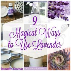 9 Magical Ways to Use Lavender - - Lavender has it's own healing qualities for sure, but one it is best know for is it's ability help calm. If you love lavender and are looking for ways to add more of it into your life,…. Lavender Uses, Lavender Crafts, Lavender Recipes, Lavender Flowers, Dried Flowers, Growing Lavender, Lavender Wands, Lavender Garden, Lavender Sachets