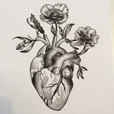 I like this ** anatomical coronary heart woodcut - Google Search...