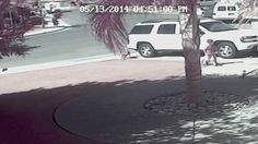 SEE IT: Cat saves boy from vicious dog attack outside California home - NY Daily News The small child was playing on his bicycle outside his Southwest Bakersfield home when a neighbor's dog ran up and bit him. The incident could have been much worse if not for the family's cat Tara intervening and chasing the dog away.